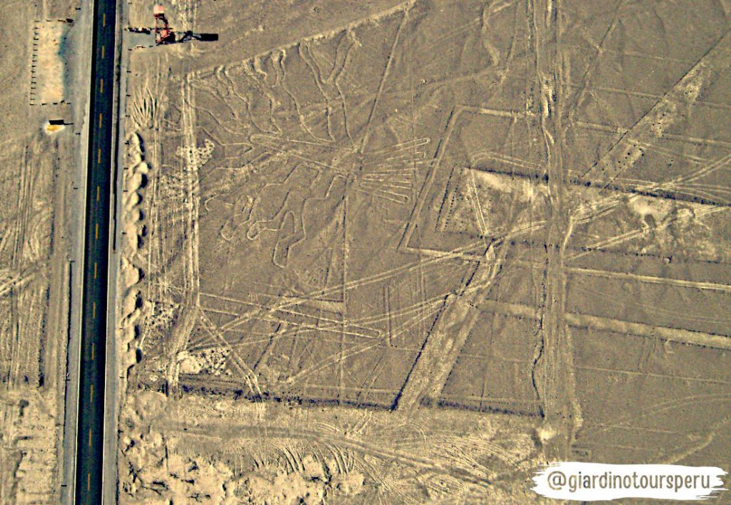 Nazca lines _ Líneas de Nasca